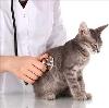 Ветеринарные клиники в Медногорске